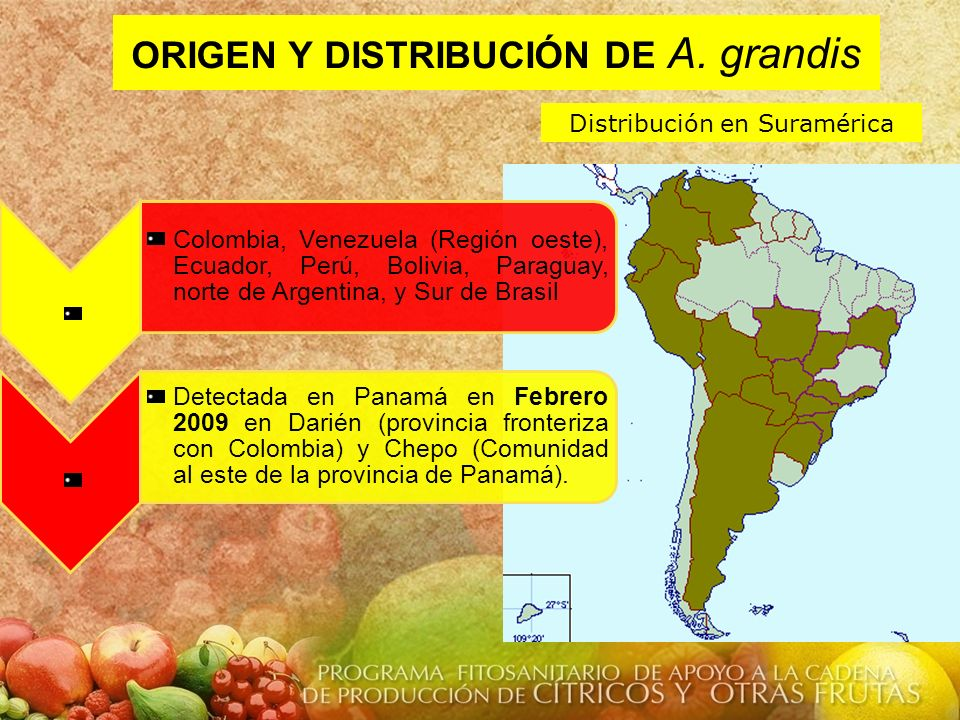 ORIGEN Y DISTRIBUCIÓN DE A. grandis