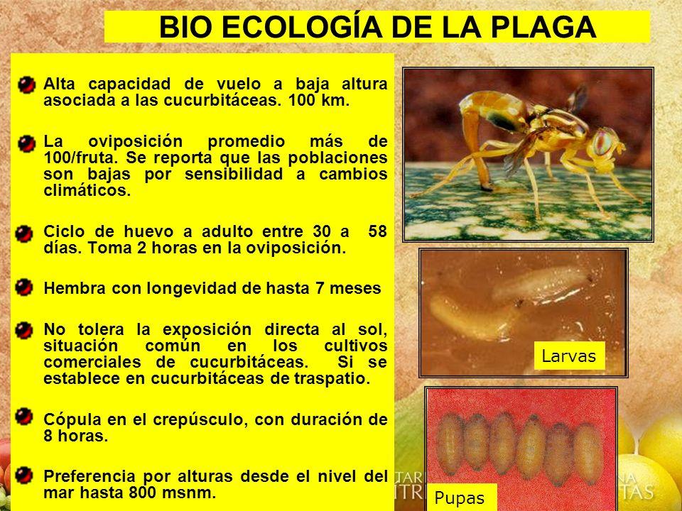 BIO ECOLOGÍA DE LA PLAGA