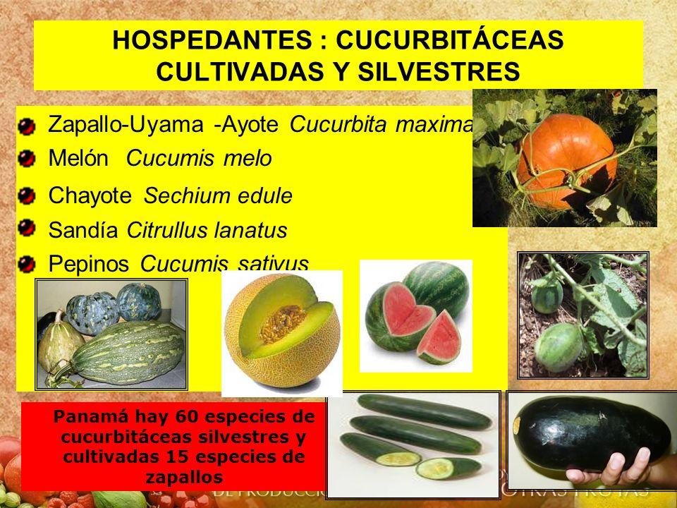 HOSPEDANTES : CUCURBITÁCEAS CULTIVADAS Y SILVESTRES