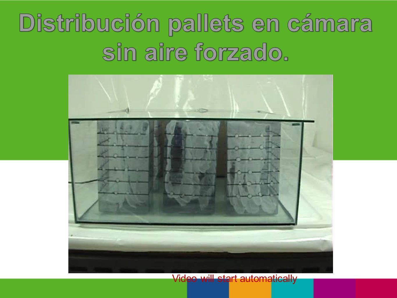 Distribución pallets en cámara sin aire forzado.