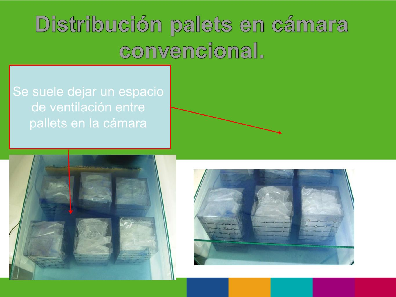 Distribución palets en cámara convencional.