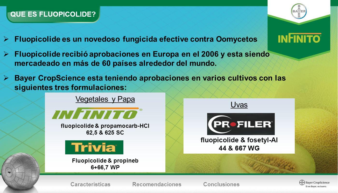 Fluopicolide es un novedoso fungicida efective contra Oomycetos