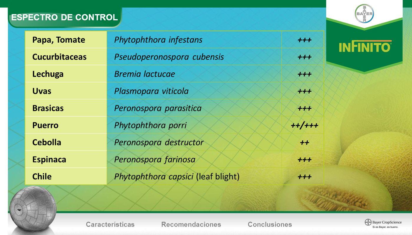 Phytophthora infestans +++ Cucurbitaceas Pseudoperonospora cubensis