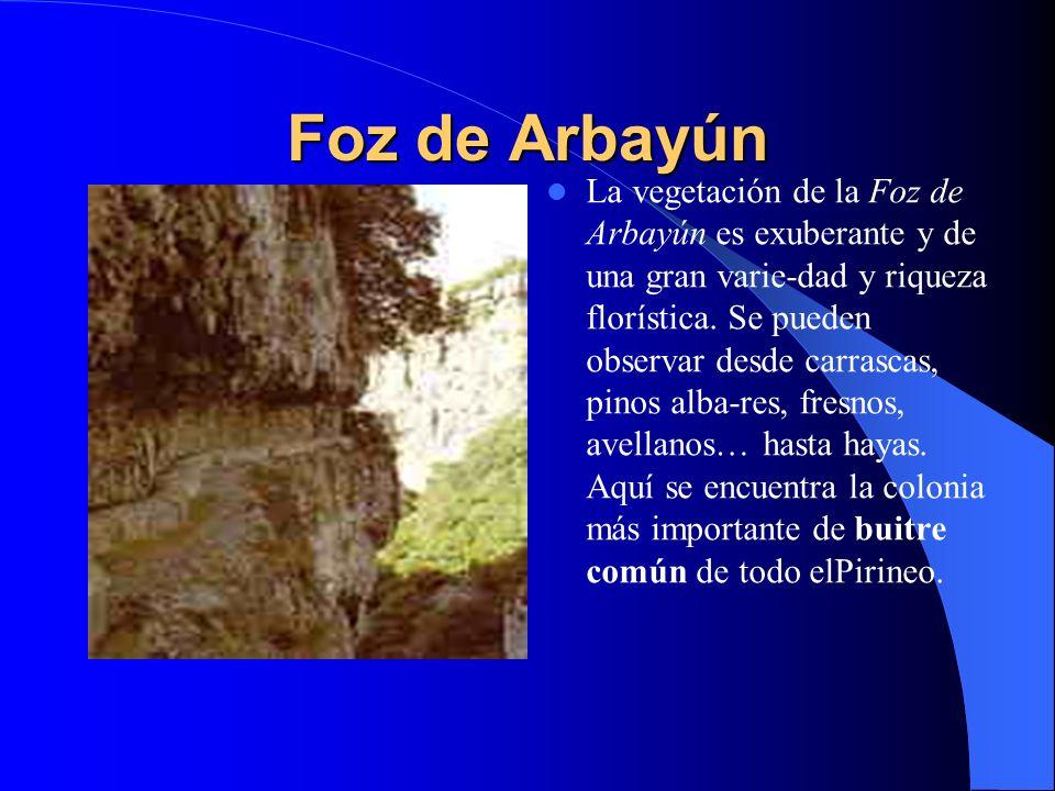 Foz de Arbayún