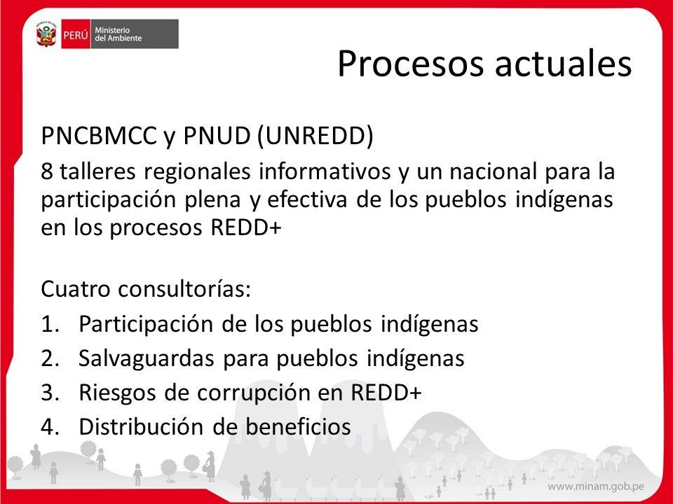 Procesos actuales PNCBMCC y PNUD (UNREDD)