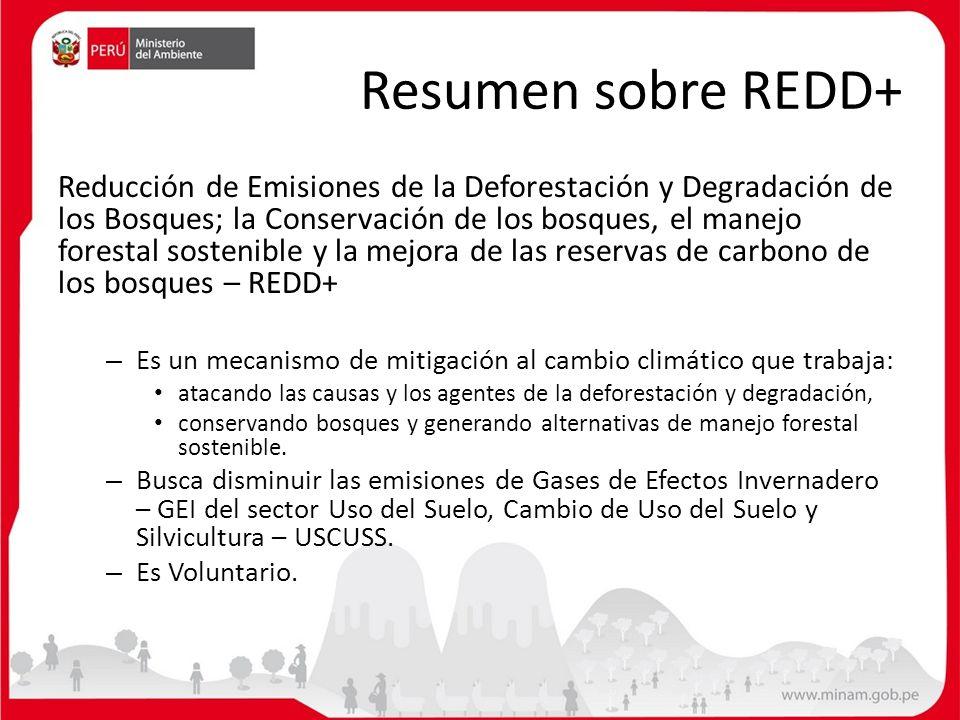 Resumen sobre REDD+