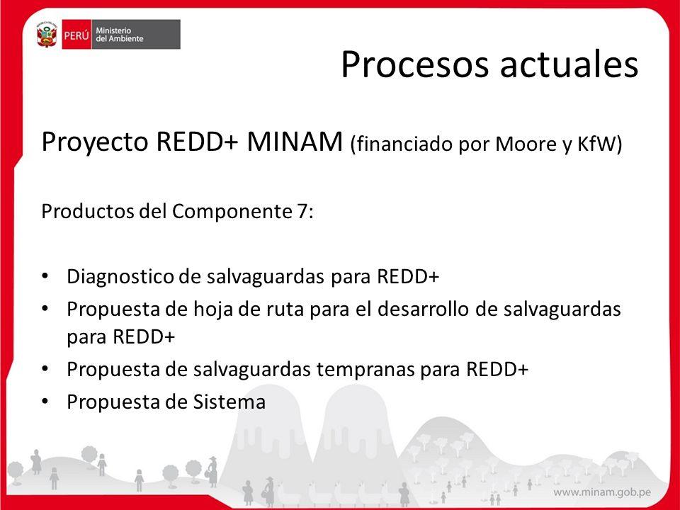 Procesos actuales Proyecto REDD+ MINAM (financiado por Moore y KfW)