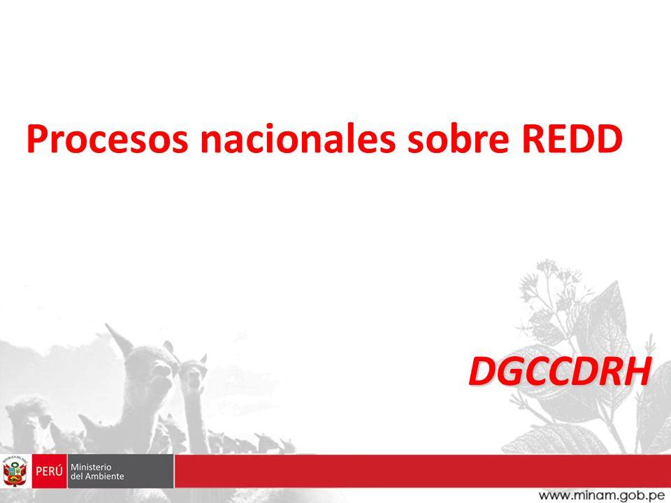 Procesos nacionales sobre REDD