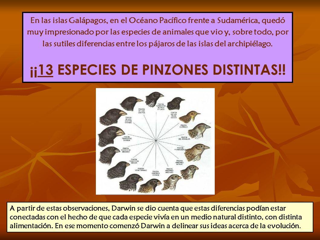 ¡¡13 ESPECIES DE PINZONES DISTINTAS!!