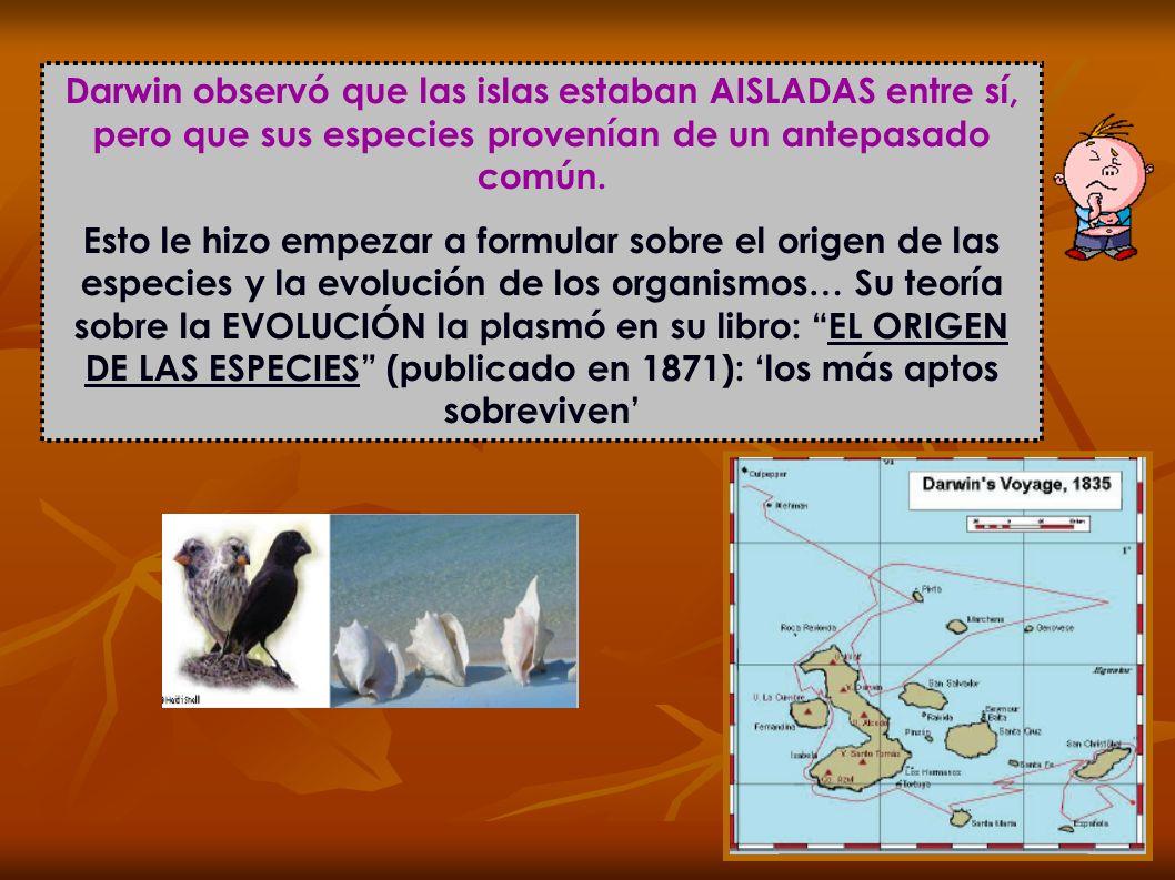 Darwin observó que las islas estaban AISLADAS entre sí, pero que sus especies provenían de un antepasado común.
