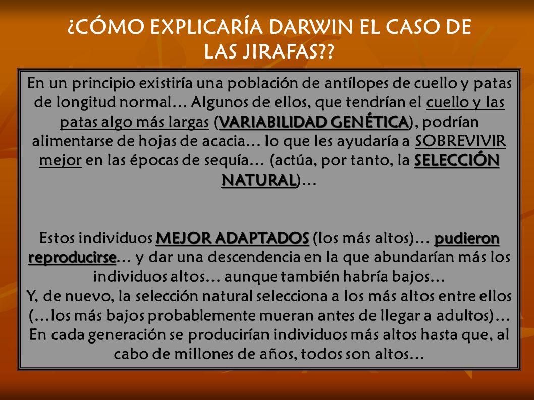 ¿CÓMO EXPLICARÍA DARWIN EL CASO DE LAS JIRAFAS