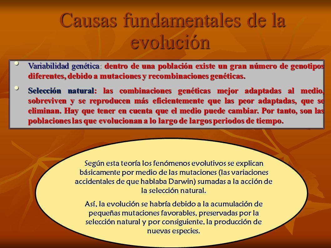 Causas fundamentales de la evolución