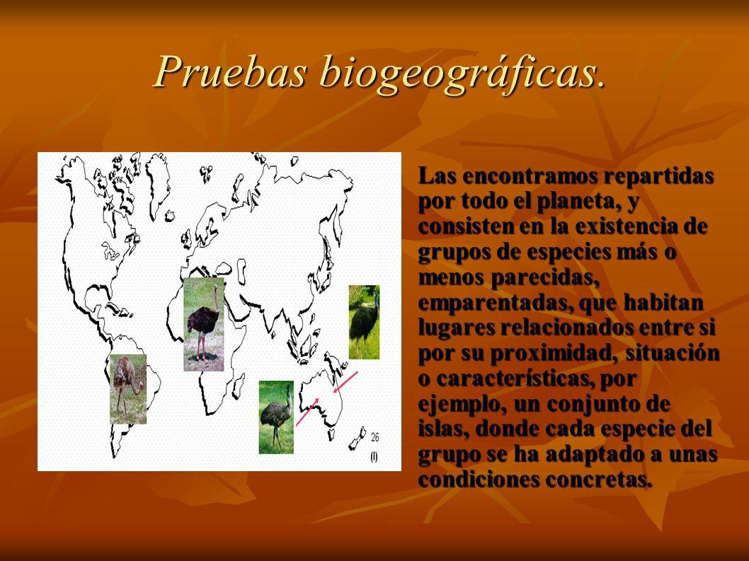 Pruebas biogeográficas.