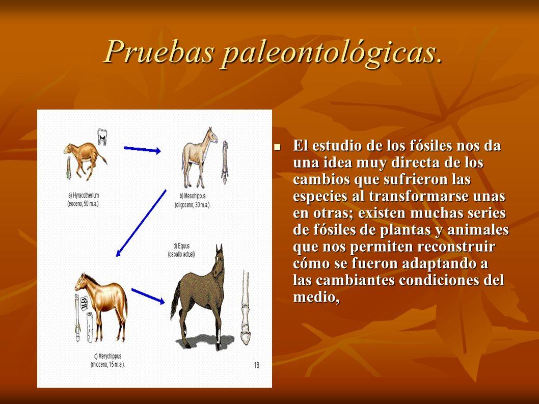 Pruebas paleontológicas.