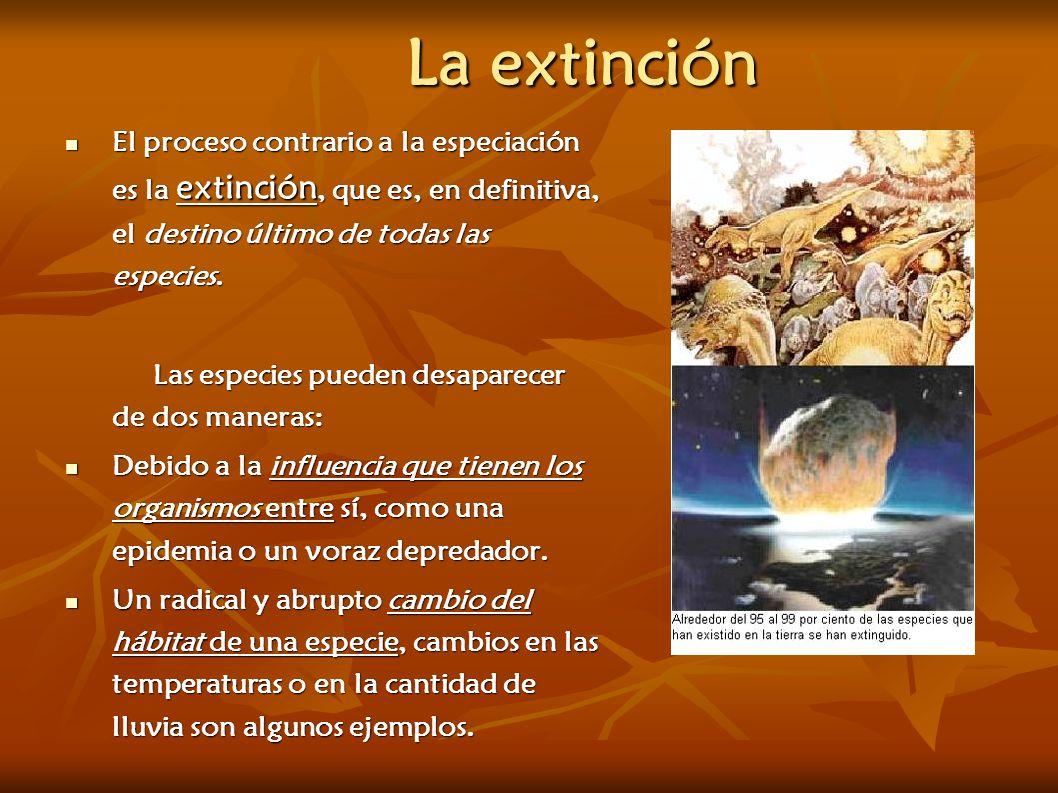 La extinción El proceso contrario a la especiación es la extinción, que es, en definitiva, el destino último de todas las especies.