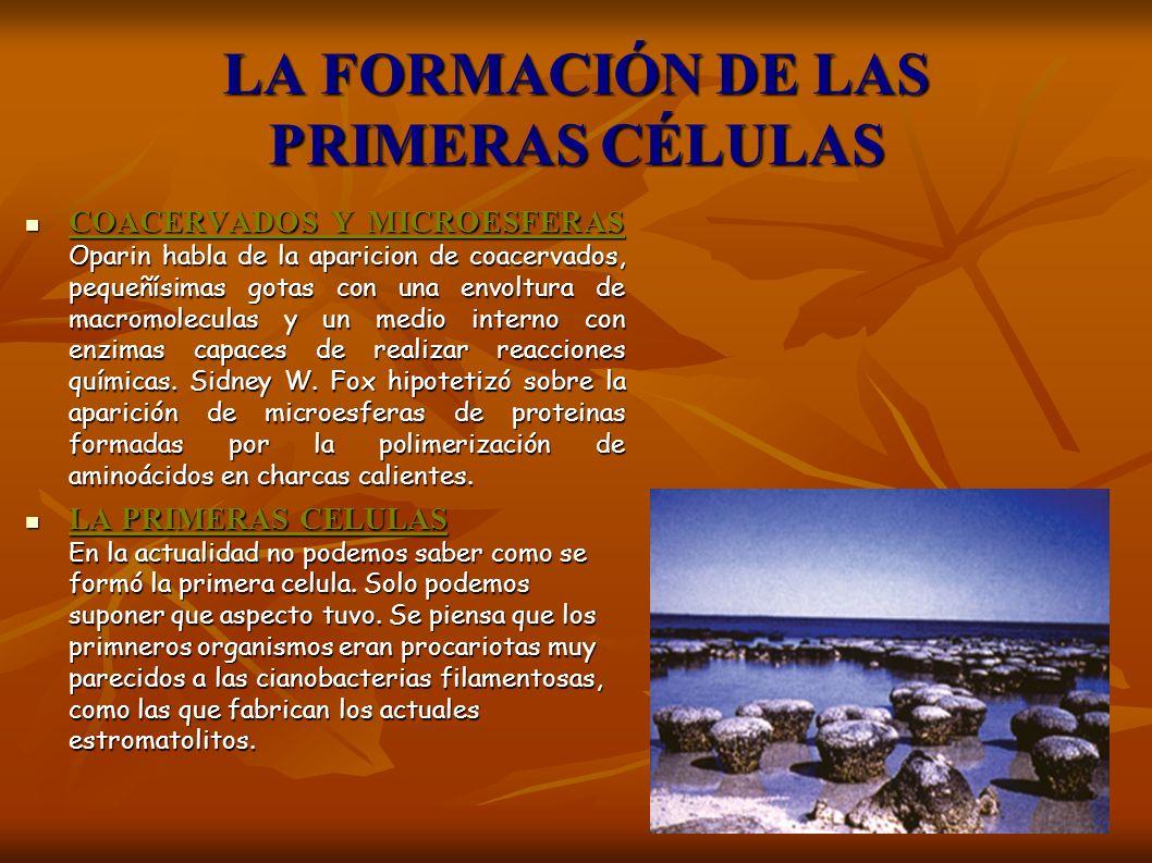 LA FORMACIÓN DE LAS PRIMERAS CÉLULAS