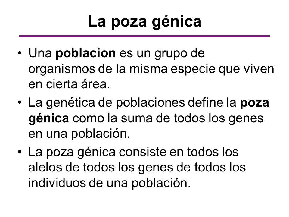 La poza génica Una poblacion es un grupo de organismos de la misma especie que viven en cierta área.