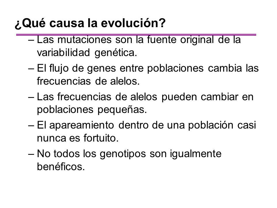 ¿Qué causa la evolución