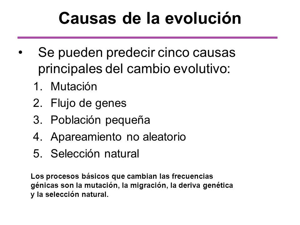 Causas de la evolución Se pueden predecir cinco causas principales del cambio evolutivo: Mutación.