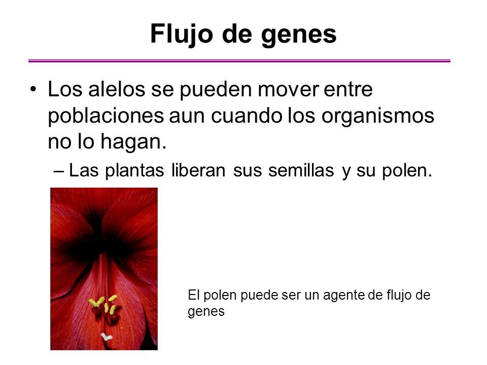 Flujo de genes Los alelos se pueden mover entre poblaciones aun cuando los organismos no lo hagan. Las plantas liberan sus semillas y su polen.