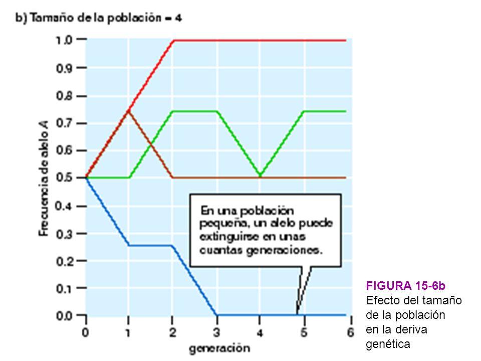 FIGURA 15-6b Efecto del tamaño de la población en la deriva genética