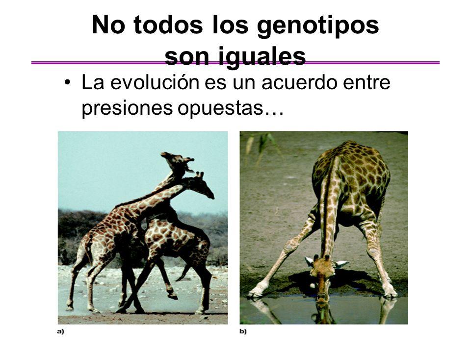 No todos los genotipos son iguales