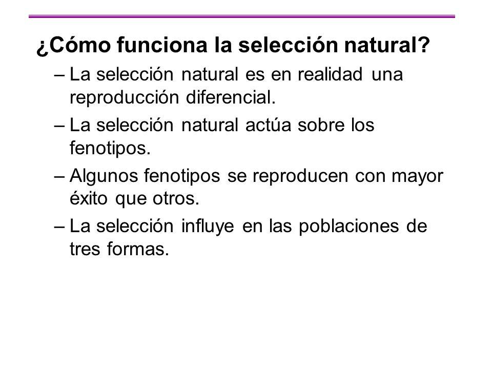 ¿Cómo funciona la selección natural