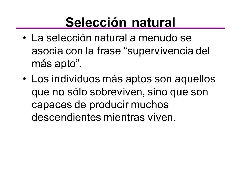 Selección natural La selección natural a menudo se asocia con la frase supervivencia del más apto .