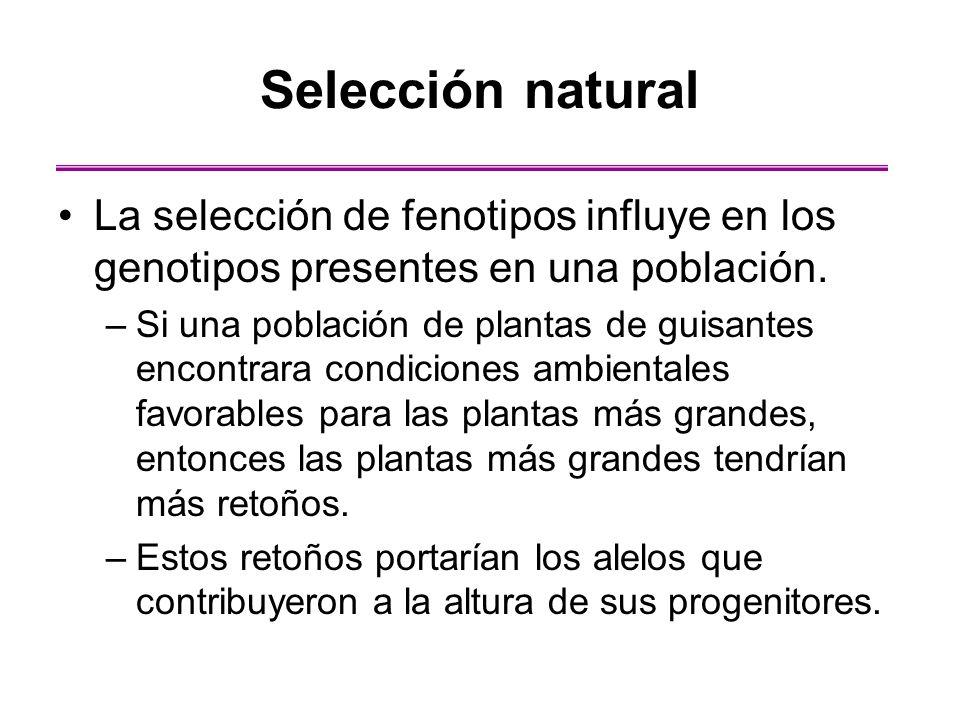 Selección natural La selección de fenotipos influye en los genotipos presentes en una población.