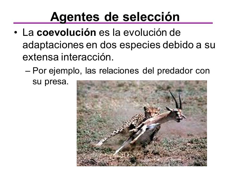 Agentes de selección La coevolución es la evolución de adaptaciones en dos especies debido a su extensa interacción.