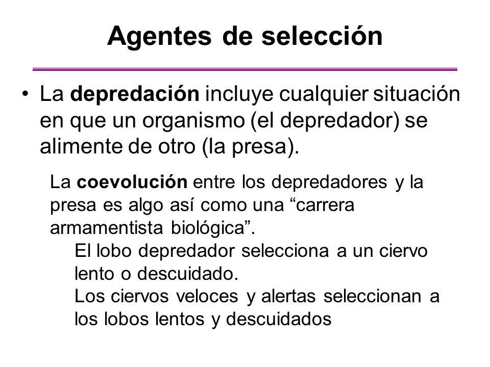Agentes de selección La depredación incluye cualquier situación en que un organismo (el depredador) se alimente de otro (la presa).