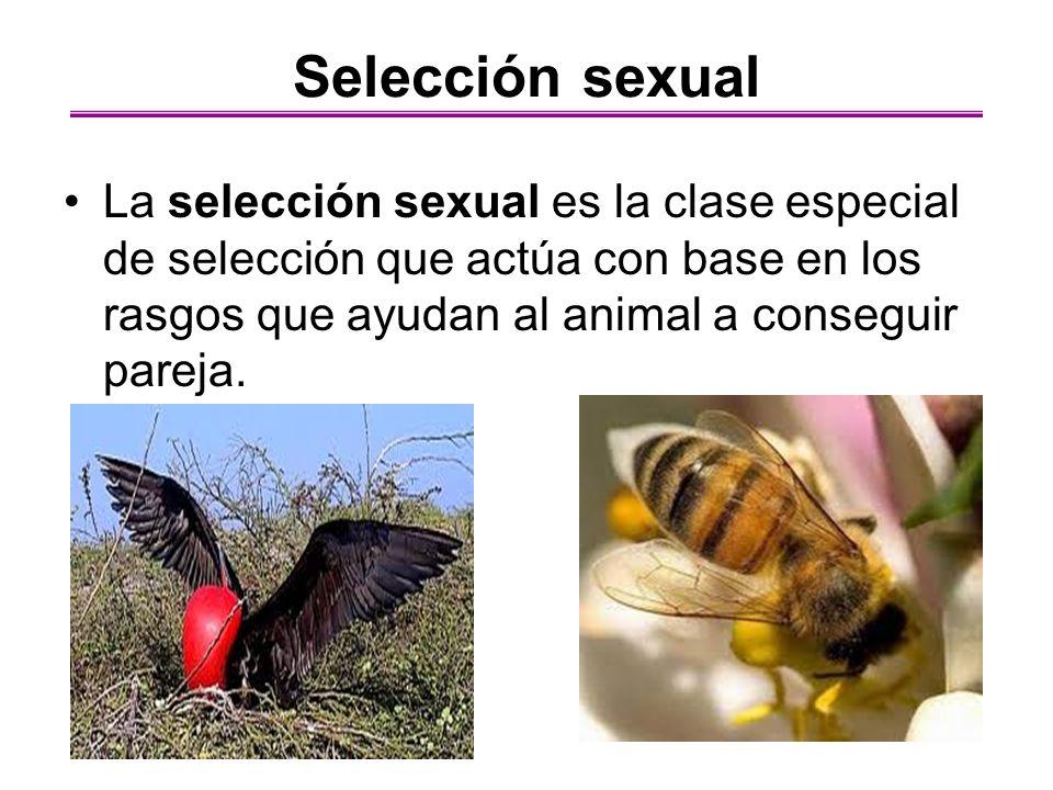 Selección sexual La selección sexual es la clase especial de selección que actúa con base en los rasgos que ayudan al animal a conseguir pareja.