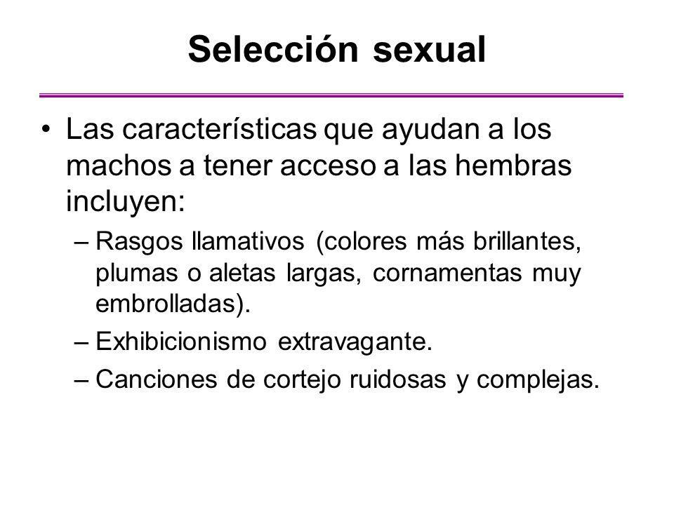 Selección sexual Las características que ayudan a los machos a tener acceso a las hembras incluyen: