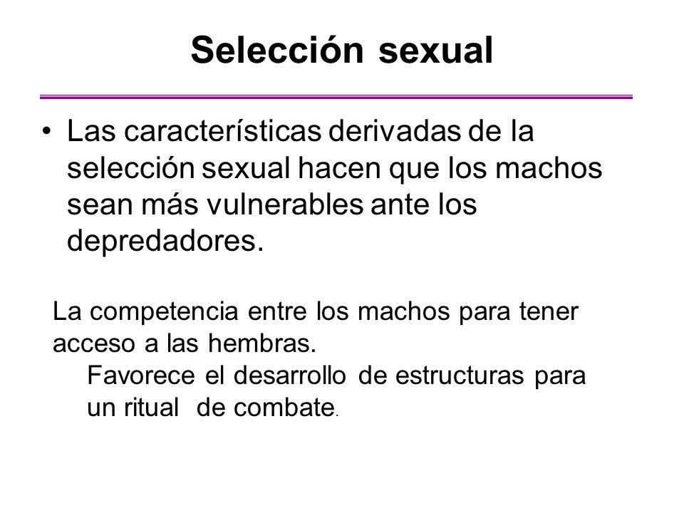 Selección sexual Las características derivadas de la selección sexual hacen que los machos sean más vulnerables ante los depredadores.