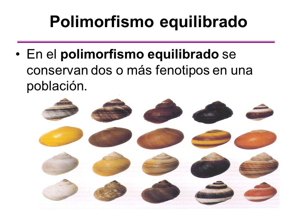 Polimorfismo equilibrado