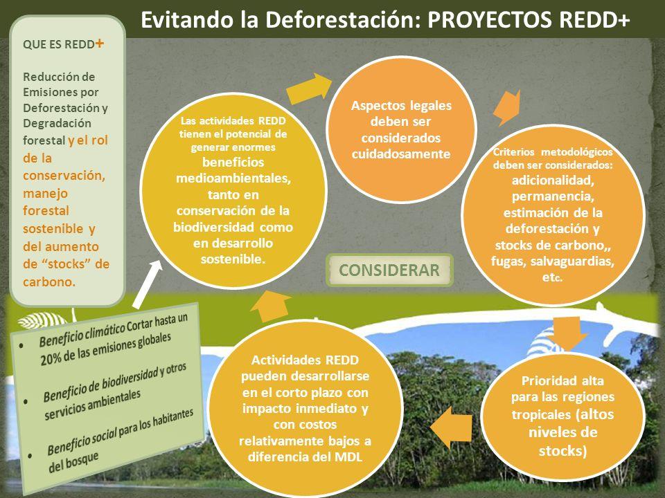 Evitando la Deforestación: PROYECTOS REDD+