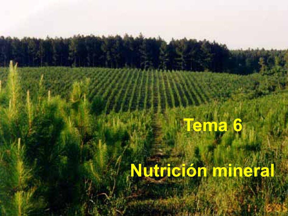 Tema 6 Nutrición mineral