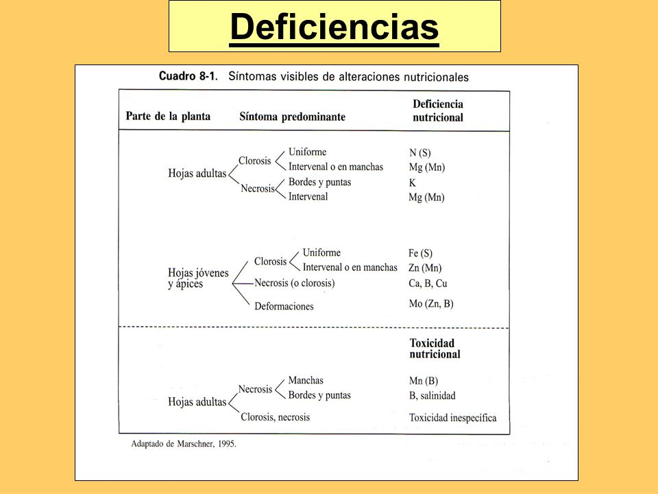 Deficiencias