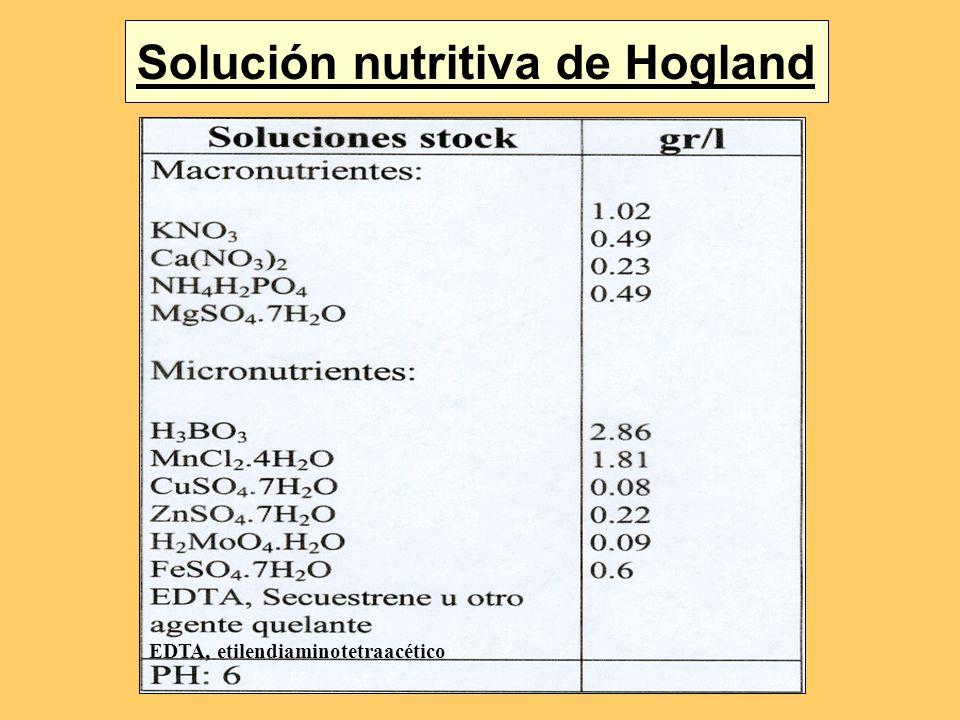 Solución nutritiva de Hogland