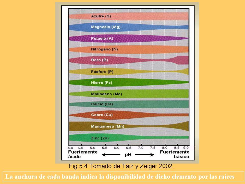 Fig 5.4 Tomado de Taiz y Zeiger.2002