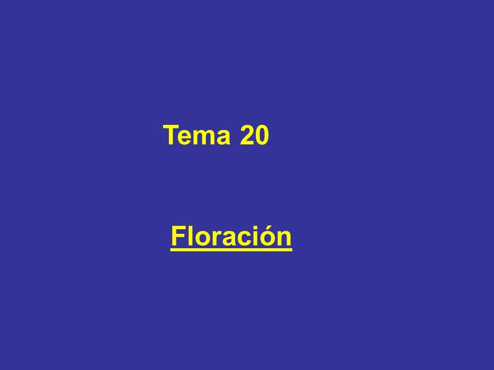 Tema 20 Floración