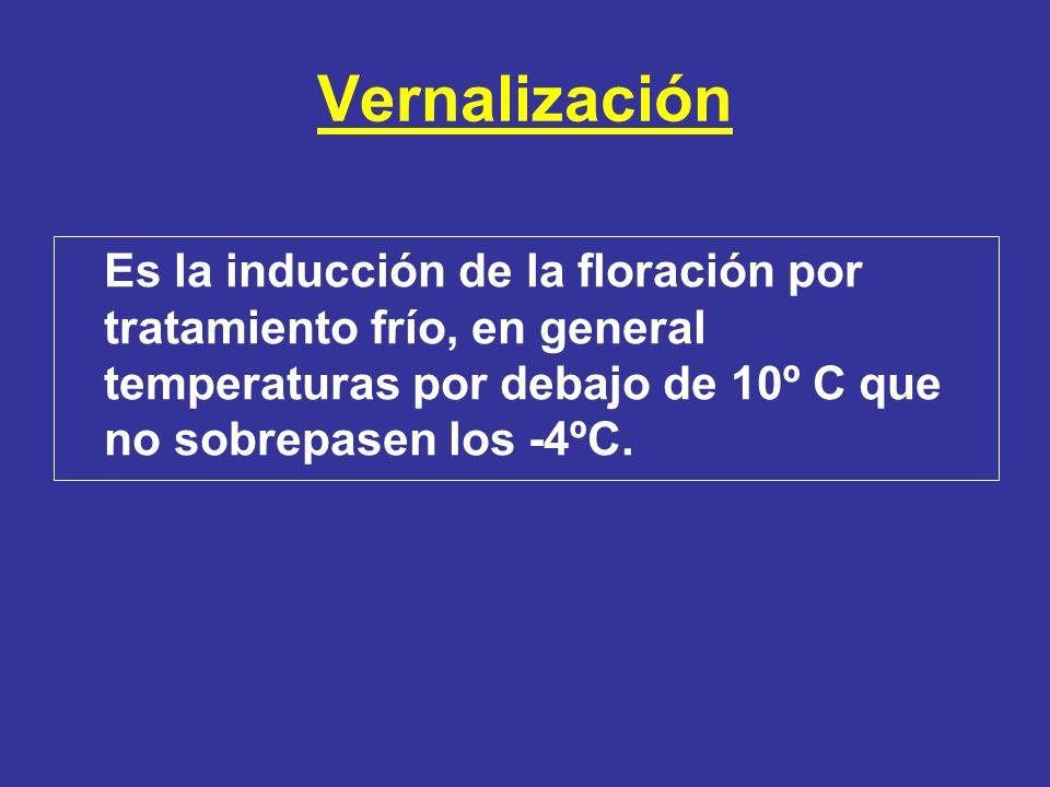 Vernalización Es la inducción de la floración por tratamiento frío, en general temperaturas por debajo de 10º C que no sobrepasen los -4ºC.