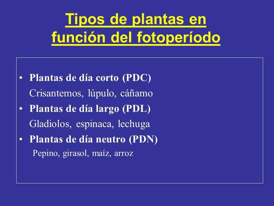 Tipos de plantas en función del fotoperíodo