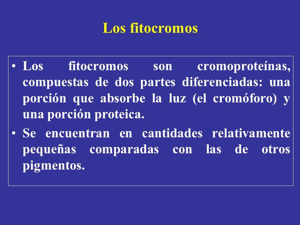 Los fitocromos