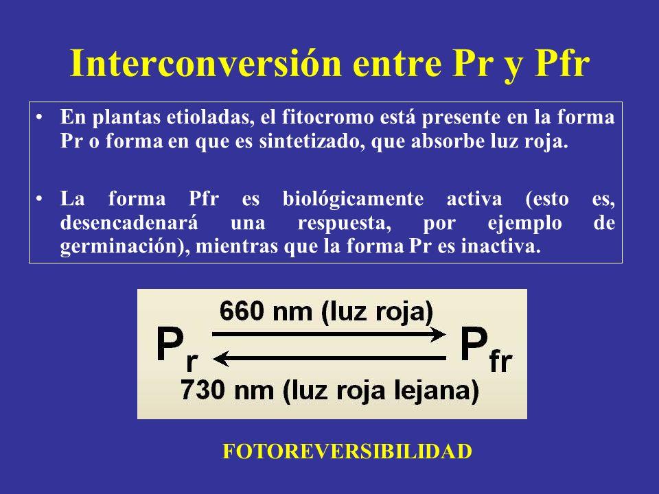 Interconversión entre Pr y Pfr