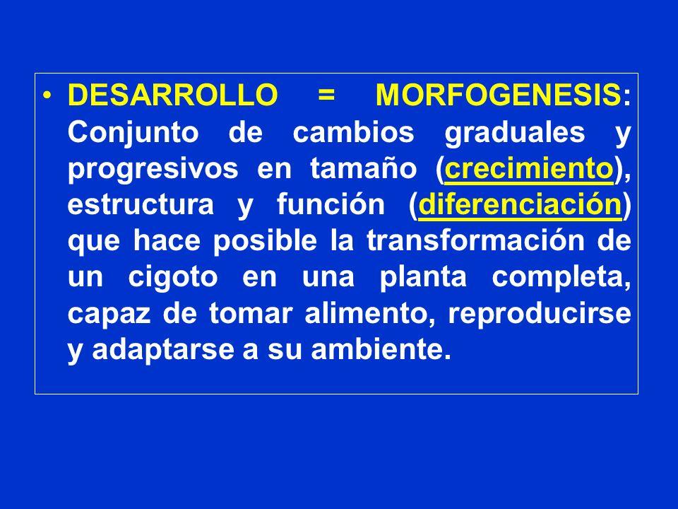DESARROLLO = MORFOGENESIS: Conjunto de cambios graduales y progresivos en tamaño (crecimiento), estructura y función (diferenciación) que hace posible la transformación de un cigoto en una planta completa, capaz de tomar alimento, reproducirse y adaptarse a su ambiente.