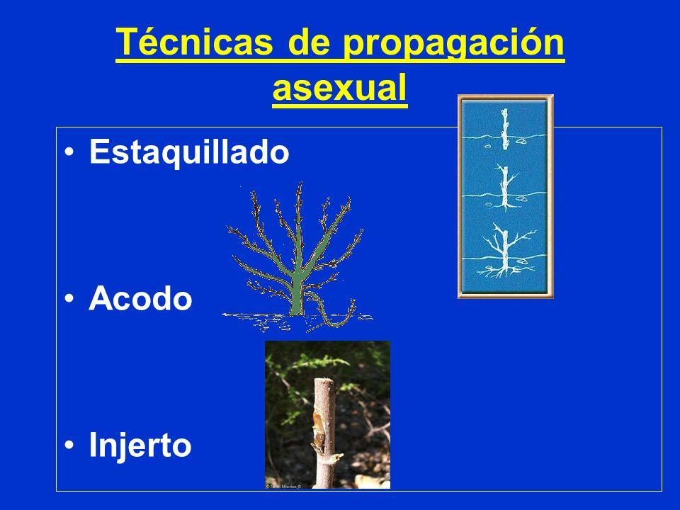 Técnicas de propagación asexual