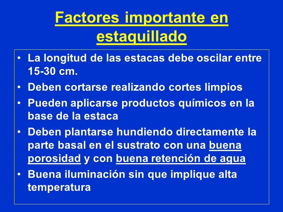 Factores importante en estaquillado