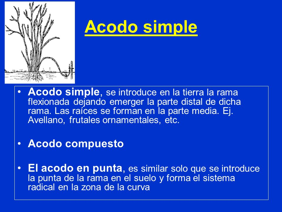 Acodo simple