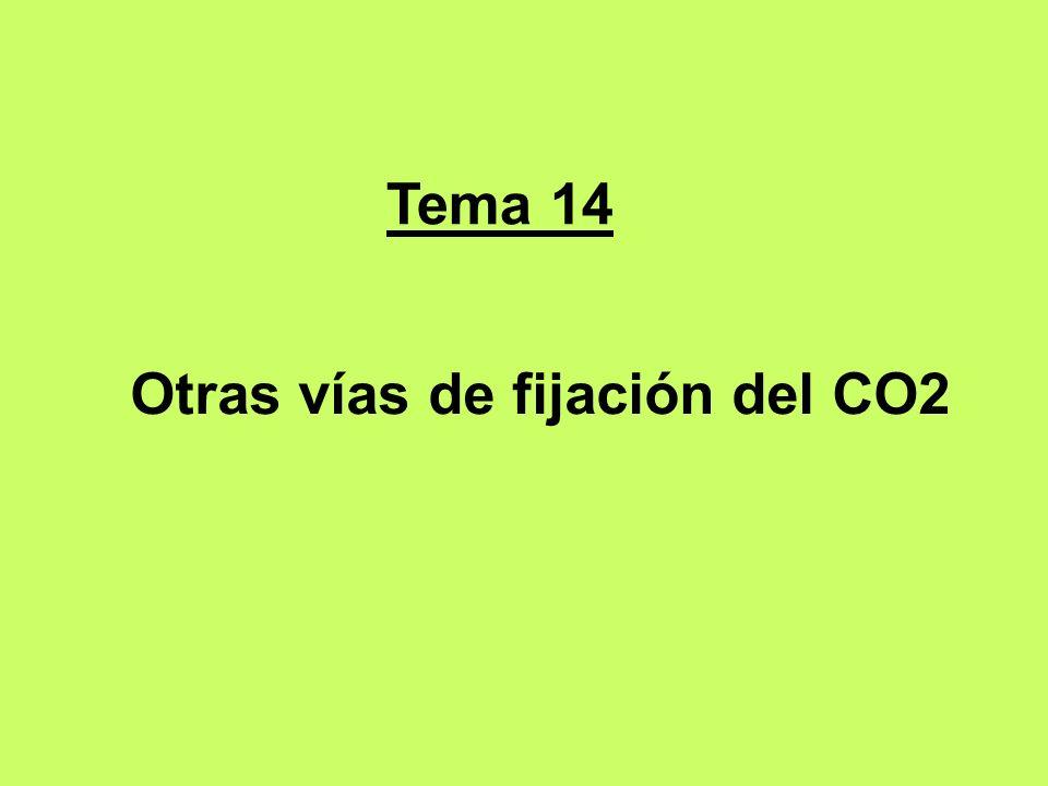 Tema 14 Otras vías de fijación del CO2